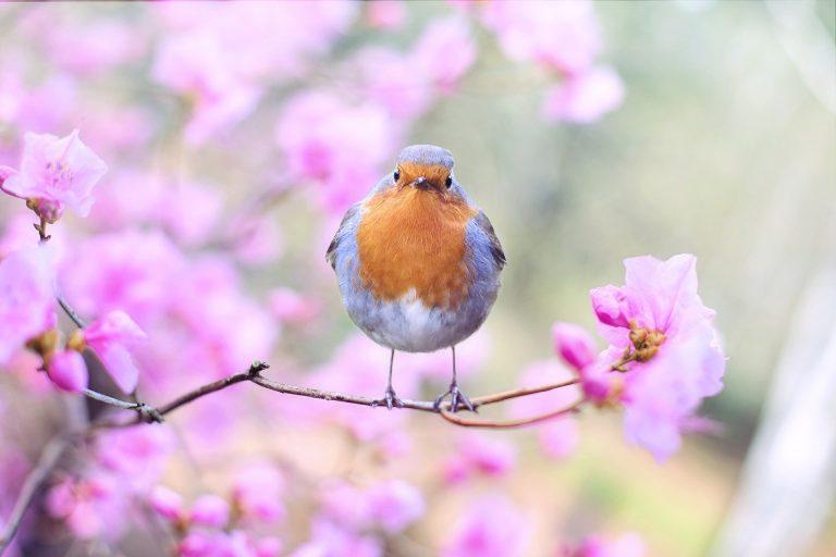 Environnement. Comptez les oiseaux des jardins avec Bretagne Vivante et le Géoca les 30 et 31 janvier