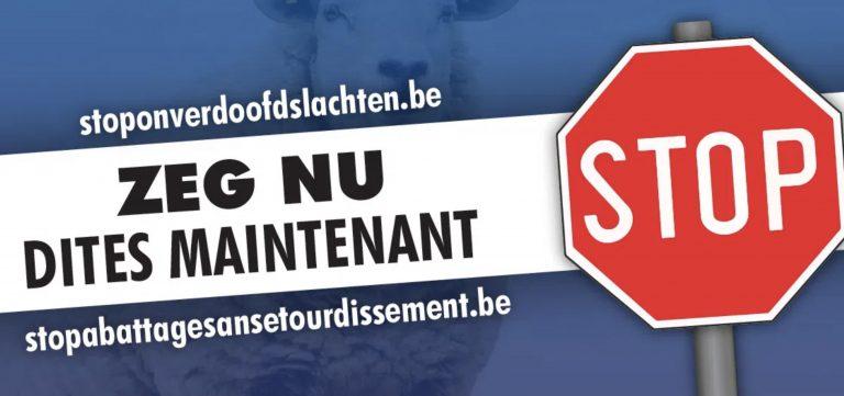Le Vlaams Belang lance une pétition contre l'abattage sans étourdissement à Bruxelles
