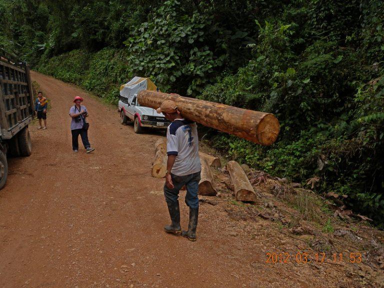 L'éolien, une menace pour la forêt amazonienne et donc pour notre planète ?