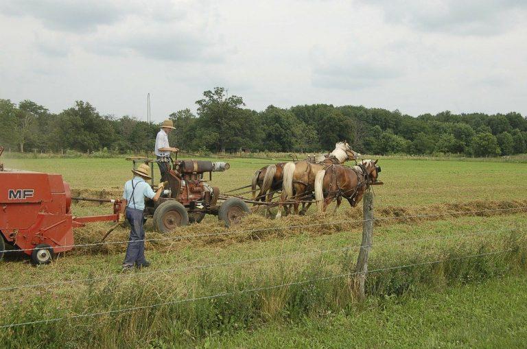 Covid-19. L'immunité collective atteinte aux USA par une communauté Amish ?