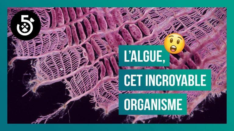 L'algue, cet organisme incroyable