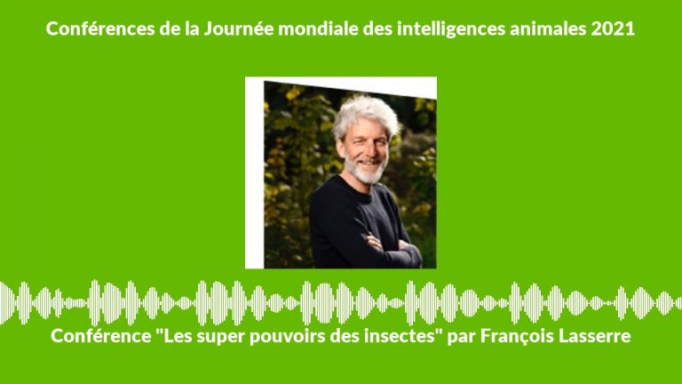 Conférence. Les super pouvoirs des insectes, par François Lasserre