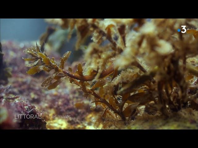 Environnement. Les mares en bord de mer
