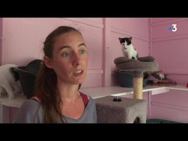 Nantes : la SPA de Carquefou constate l'explosion des abandons de chats depuis le début de l'été