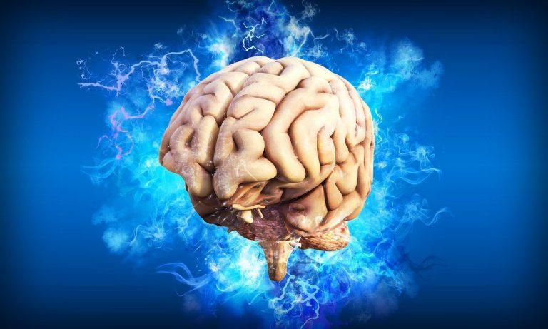 Les Européens et les Est-Asiatiques ont une plus haute fréquence de gènes augmentant l'efficience cérébrale/ l'intelligence