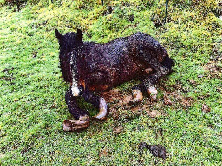 Jugée pour avoir abandonné ses 68 animaux dans une ferme près de Carhaix